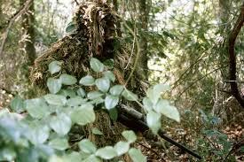forestsnipe